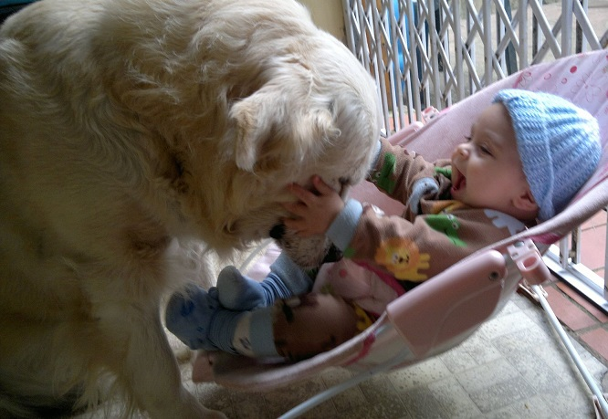 Pets_and_babies